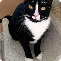 Adopt A Pet :: Ophelia - Medway, MA