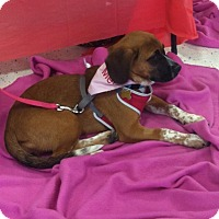 Adopt A Pet :: Olive ADOPTED! - Bridgewater, NJ