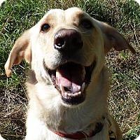 Adopt A Pet :: Smiley - Arlington Heights, IL