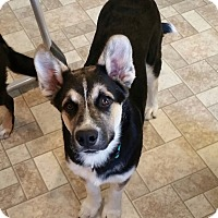 Adopt A Pet :: Kao - West Richland, WA