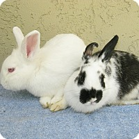 Adopt A Pet :: Luna & Scooby - Bonita, CA
