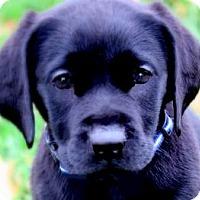 Adopt A Pet :: MISS REESE(A SAD SAD STORY!! - Wakefield, RI