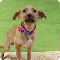 Adopt A Pet :: Serenity - Berkeley Heights, NJ