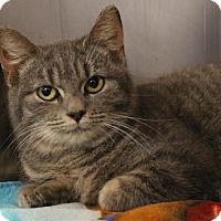 Adopt A Pet :: C-68421 Oswin - Westampton, NJ