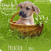 Adopt A Pet :: Preacher - West Hartford, CT