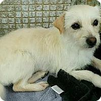 Adopt A Pet :: Max - Orange, CA