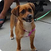 Adopt A Pet :: Palomito - Willingboro, NJ
