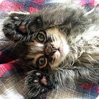 Adopt A Pet :: Ernie - Austin, TX
