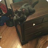 Adopt A Pet :: Leia - Millersville, MD