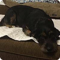 Adopt A Pet :: Cindy - Humble, TX