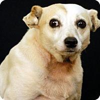 Feist Mix Dog for adoption in Newland, North Carolina - Sybyl