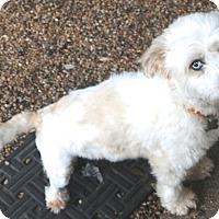 Adopt A Pet :: Amy - Woonsocket, RI