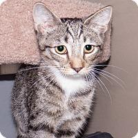 Adopt A Pet :: Alvin - Elmwood Park, NJ