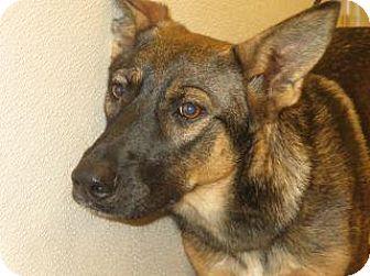 German Shepherd Dog Mix Dog for adoption in Wildomar, California - Princess
