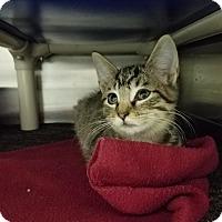 Adopt A Pet :: Pollax - Elyria, OH