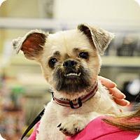Adopt A Pet :: Gizmo - Rockford, IL
