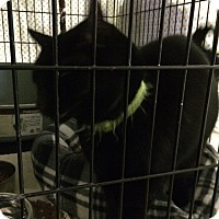 Adopt A Pet :: Izzy - Byron Center, MI