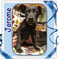 Adopt A Pet :: Jerome - oxford, NJ