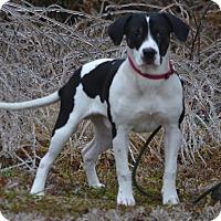 Adopt A Pet :: Marcell - Lebanon, MO