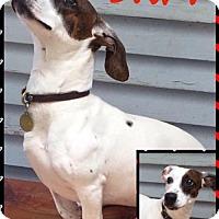 Adopt A Pet :: Sam - North Richland Hills, TX