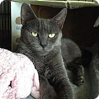 Adopt A Pet :: Carla - Island Park, NY