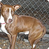 Adopt A Pet :: Cajun - Fort Valley, GA