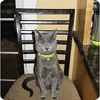 Adopt A Pet :: Mr. Green - Manalapan, NJ