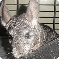 Adopt A Pet :: Arey - Titusville, FL