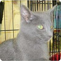 Adopt A Pet :: Spunky - Sterling Hgts, MI