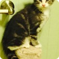 Adopt A Pet :: Thistle - McHenry, IL