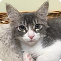 Adopt A Pet :: Puddles - Woodland Hills, CA