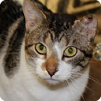 Adopt A Pet :: Matthew - Savannah, MO
