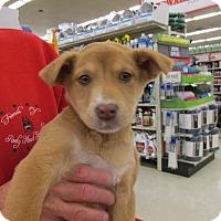 Adopt A Pet :: Janice - Rocky Mount, NC