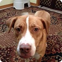 Adopt A Pet :: Dora - Grand Rapids, MI