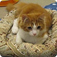 Adopt A Pet :: Williker - Ashland, MA