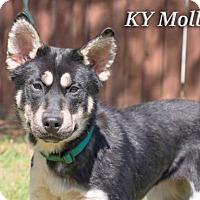 Adopt A Pet :: KY Mollie - New Castle, DE