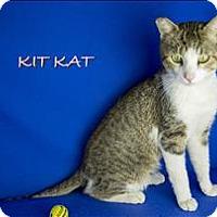 Adopt A Pet :: Kit Kat - Sherwood, OR