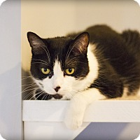 Adopt A Pet :: Gizmo - Lincoln, NE