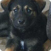 Adopt A Pet :: Jalisa - Surprise, AZ