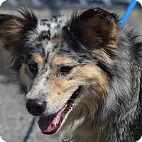 Adopt A Pet :: Kadence (KK) - Sudbury, MA