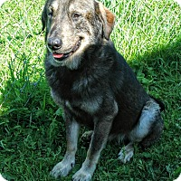 Shepherd (Unknown Type) Mix Dog for adoption in Appleton, Wisconsin - George