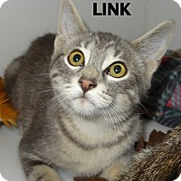 Domestic Shorthair Kitten for adoption in Lapeer, Michigan - MANY KITTENS!