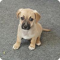 Adopt A Pet :: McTony - Fresno, CA