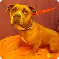 Adopt A Pet :: PRECIOUS - Upper Marlboro, MD