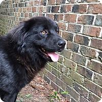 Adopt A Pet :: Shadow - Willingboro, NJ