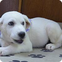 Adopt A Pet :: Lilly - Manning, SC