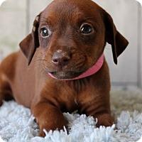 Adopt A Pet :: Meagan - Waldorf, MD