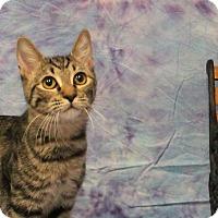 Adopt A Pet :: Rebekah - Stockton, CA