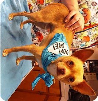 Chihuahua Mix Dog for adoption in Raleigh, North Carolina - Tigger