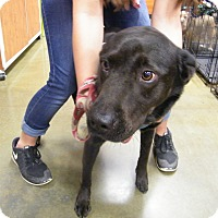 Adopt A Pet :: Gurley - Macon, GA